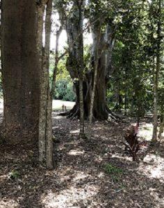 Kholo Garden